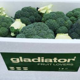 Brocoli Gladiator Fruit Lovers